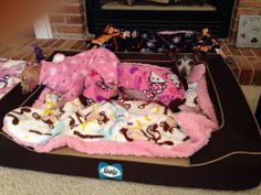 Lil Olive and Agnes on their new Sealy Dog Bed!