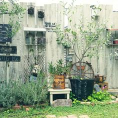 Organic Gardening Store Near Me Picket Fence Garden, Garden Junk, Garden Shop, Garden Fencing, Dream Garden, Garden Art, Garden Landscaping, Garden Design, Eclectic Gallery Wall