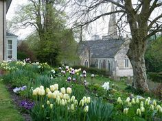 Planning to plant a tulip border in the front of the house... I love the yellow, purple, and white combo!
