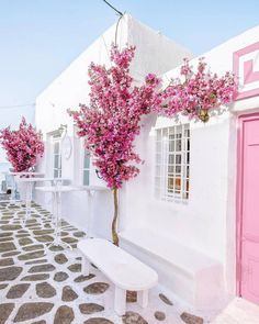 Touches of Magical pink amongst the white washed walls and cobblestoned paths of Náousa, Kikladhes, Greece. It's magic in the making!