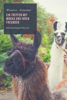 Alpakawandern im Dirndltal: It's me – Mokka Tolle Hotels, Austria, German, Happiness, Travel, Animals, Inspiration, Game Reserve, Beautiful Places
