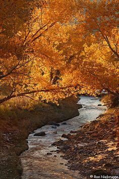 Sulphur Creek, Capitol Reef National Park; photo by Ron Niebrugge
