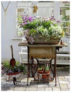 Blomvillig och buskig ! Här fortsätter planerandet och drömmandet om sommarens blommande urnor och krukor. Den afrikanska Marger...