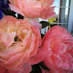 Are you crazy about peonies too? #mossmountain #sharethebounty #joy #americangrown #flowers #spring #fresh