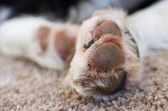 Through the Lens of Kimberly Gauthier, Rodrigo, paws, carpet