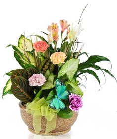 """""""LUSCIOUS GREEN GARDEN BASKET."""" This luscious green garden basket is filled with a variety of green plants and accented with brightly colored carnations. A wonderful way to express your thoughts and wishes to anyone special."""