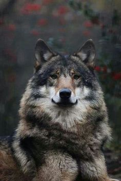 Wolf. http://ura19627.wix.com/komanda