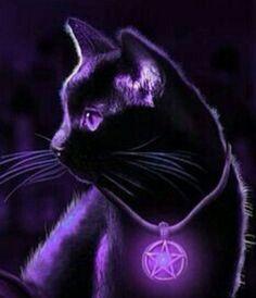 Moon Magic, Meet, Cats, Animals, Summer Recipes, Gatos, Animales, Kitty Cats, Animaux