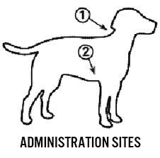 sub q injection sites for dogs google search dog