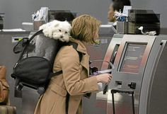 12 tips for traveling with pets