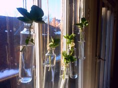 Glass Bottles Decor