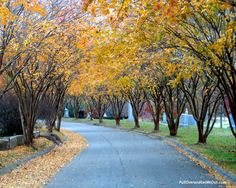 Bright trees in Fall at Historic Oakwood Cemetery
