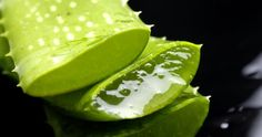 How to Grow Aloe. Must read, one of the most amazing healing plants in the world!