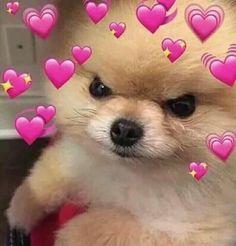 Read Memes de cachorros¹ from the story Memes para Qualquer Momento na Internet by parkjglory (lala) with reads. Cute Cat Memes, Cute Love Memes, Cute Animal Memes, Dog Memes, Funny Animals, Cute Animals, Funny Memes, Meme Meme, Sweet Dogs