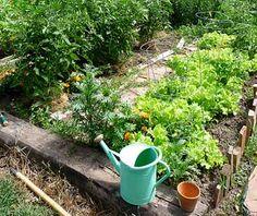 Companion Planting 101 - HOMEGROWN