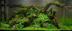 Layout 76 - Adrie Baumann - Tropica Aquarium Plants