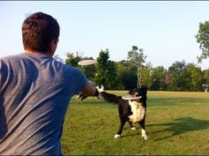 Learn How to Throw a Frisbee to your Dog from trainer Zak George! #frisbee, #dog #zakgeorge