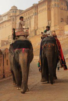 Poor beautiful elephants who can imagine Rajasthan Jaipur without them, but still. Agra, Goa India, South India, Varanasi, Travel Quotes Wanderlust, Travel Photographie, Amazing India, Jaisalmer, Udaipur