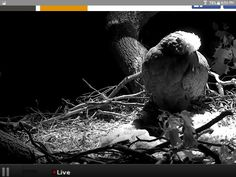 Night vision camera.  They see no light, only they do. DC EAGLETS 2016