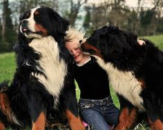 I absolutely love this! Looks like bliss to me: a bernese mountain dog on either side!
