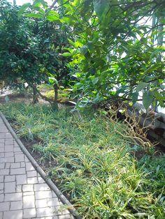 :) Flora, Sidewalk, Plants, Walkway, Plant, Walkways, Planting