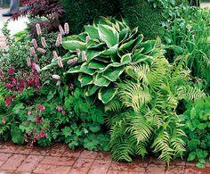 stínomilné rostliny uklidí listí za vás