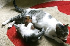 Kitty with a cat - 25 Photo (13)