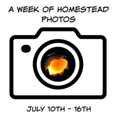A Week of Homestead Photos July 10th - 16th