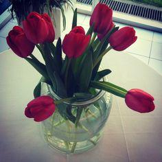 Tulipanes