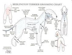 dog grooming chart   Grooming Chart
