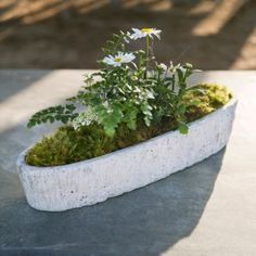 Oak Bulb Planter in House+Home HOME DÉCOR Room Accents Trays+Bowls at Terrain $20.00