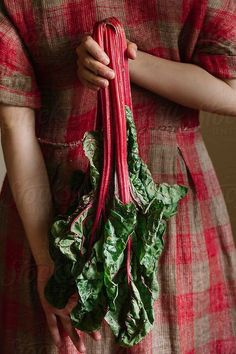 Person holding beetroot plant by Alberto Bogo - Beet, Vegetable - Stocksy United Irish Cottage, Red Cottage, Red Green, Green And Grey, Woodlands Cottage, Farm Photo, Rhubarb Recipes, Chocolate Cherry, Beetroot