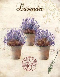 Obraz na plátně-lavender - zvětšit obrázek: