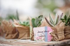 succulent favors | Caroline + Ben #wedding