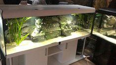 Nature Aquarium, Saltwater Aquarium, Aquarium Fish Tank, Freshwater Aquarium, Cool Fish Tank Decorations, Fish Aquarium Decorations, 125 Gallon Fish Tank, Aquarium Architecture, Fish Pond Gardens