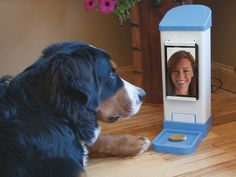 iCPooch -- Internet Pet Treat Delivery & Video Chat by Bondgy, Inc. — Kickstarter