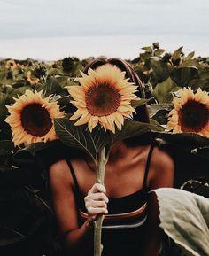 Flower - sunflower - gardrn