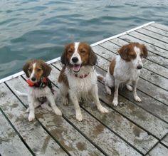 KOOIKERHONDJE-Get on my dock right now.