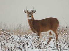 The deer in the field - I remember seeing this many times.
