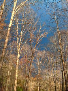 Touching heaven. Vale, NC - Melissa Wilson, photographer