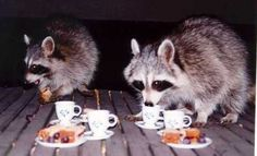 somebody put this little tea party on their deck for the raccoons. awesome