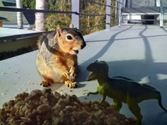 Squirrel and friend