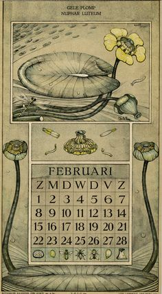 Le Roy, Charles, illustrator. February. Botanische kalender (Dutch botanical calendar). 1925.