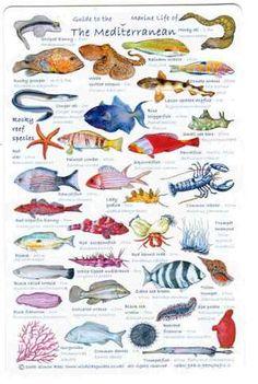 poster de peces del Mediterráneo