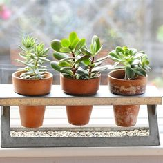 Succulent Trio in a Galvanized Z-Stand - FREE Shipping!