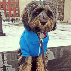 Ziggy braves the New York winter with the  american apparel   Flex Fleece Hoodie.
