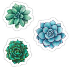 """Succulent Drawings "" Stickers by authenticity 