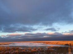 The salt meadows of Nyord, the little island near Moen. Denmark