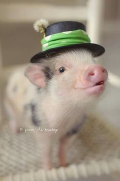 Pig in a hat!!!