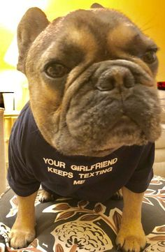 French Bulldog Fren Bulldog French Bulldog Funny French Bulldog